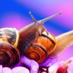 How Do Snails Reproduce