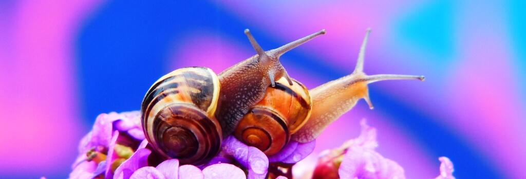 How Do Snails Reproduce