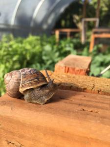Ric's happy snails
