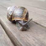 snail farming south africa