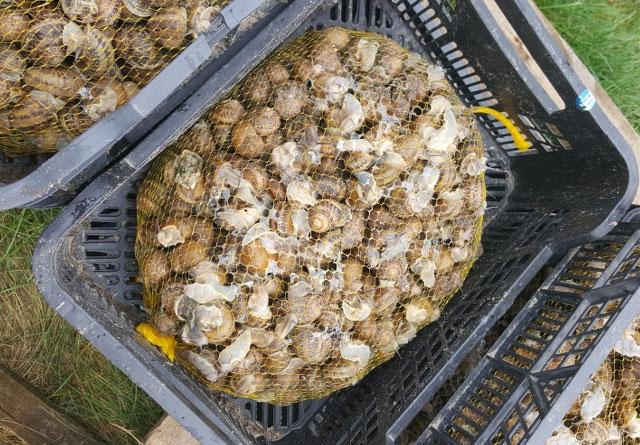 snail packaging