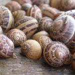 how to set up a snail farm