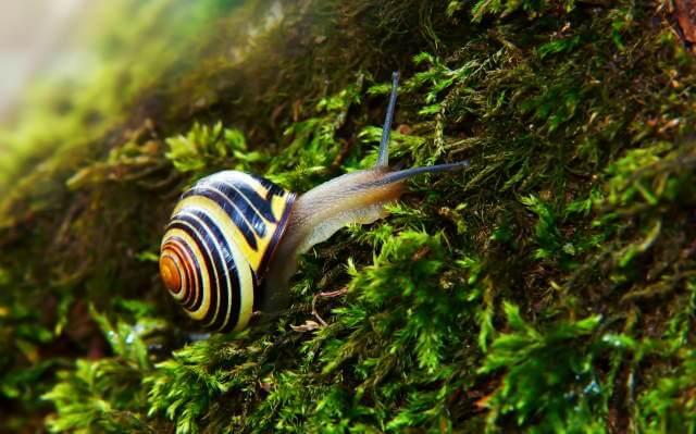 Snail Grazing