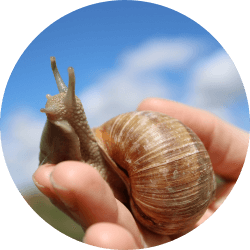 About Escargot World