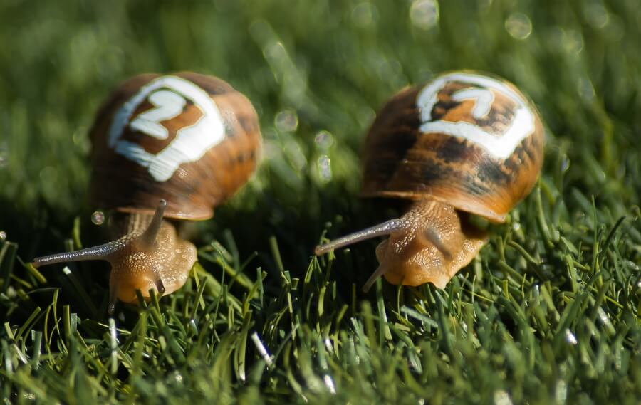 A snail race for the fastest snail