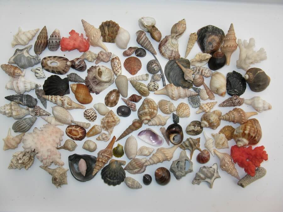 Different types of snail shells