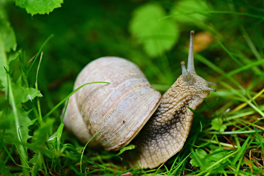 cute picture of a snail pet