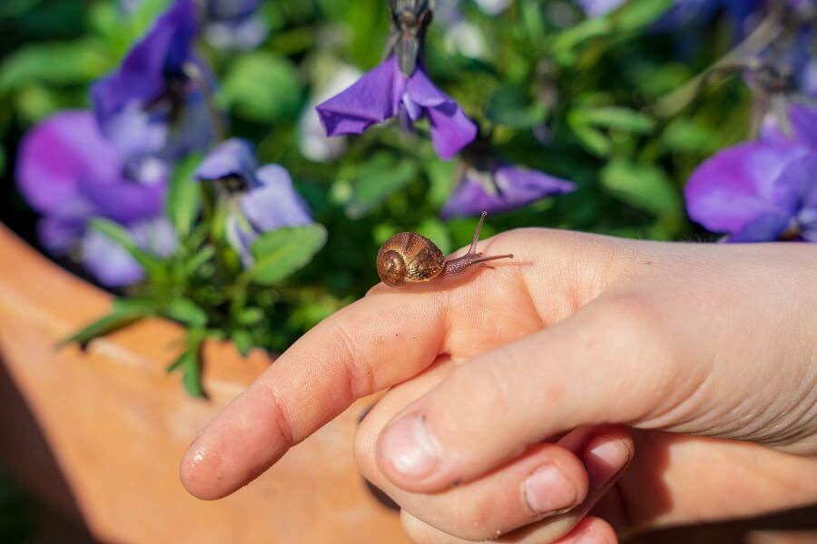 a kid holding a pet snail