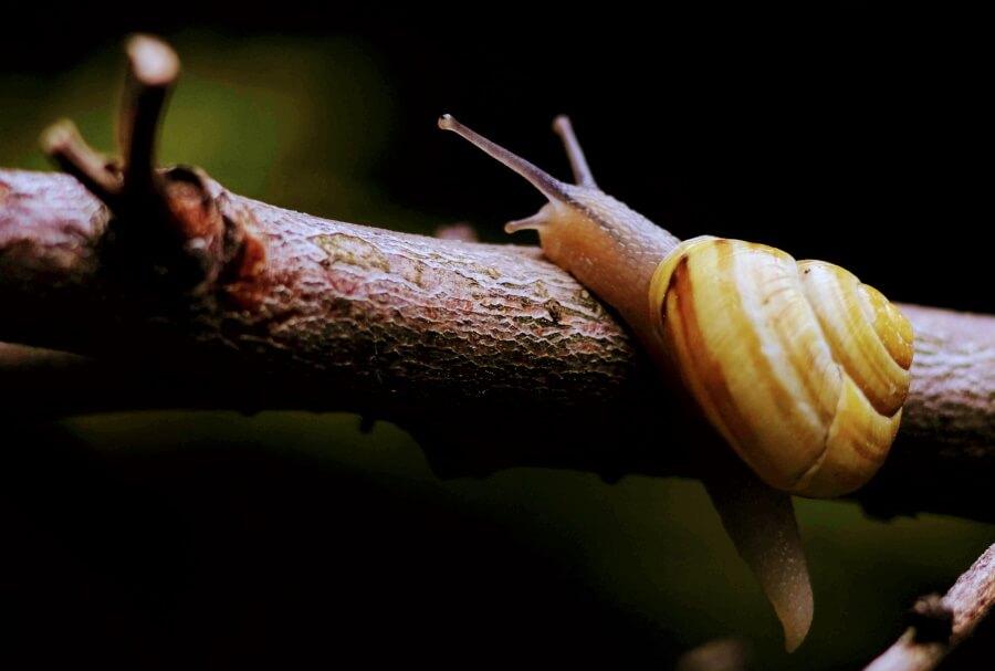 a snail climbing on a branch