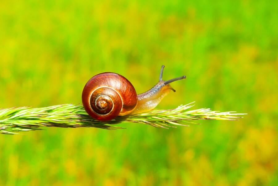 a snail in a garden