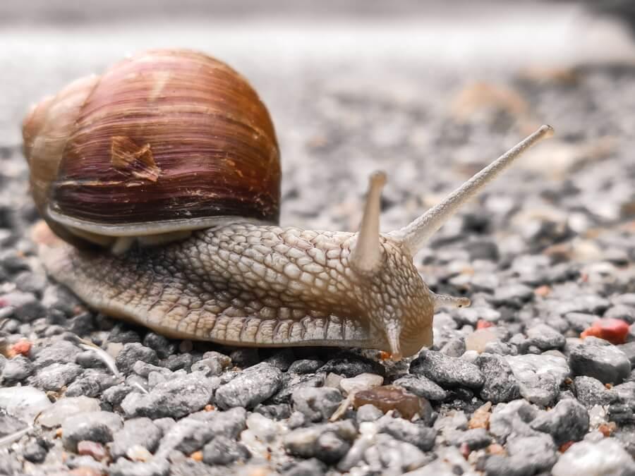 a snail in a rocky habitat