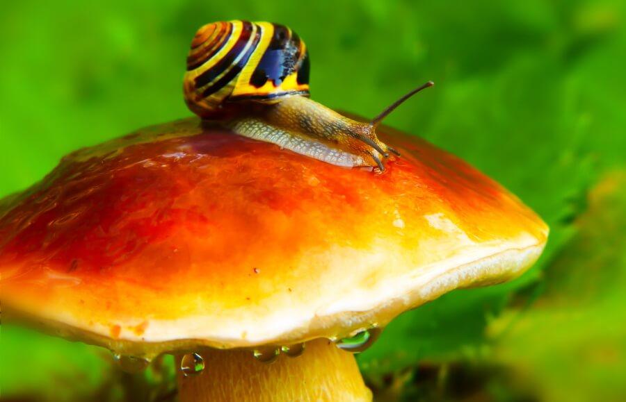 a snail on a mushroom