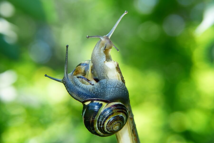 two snails eating a plant